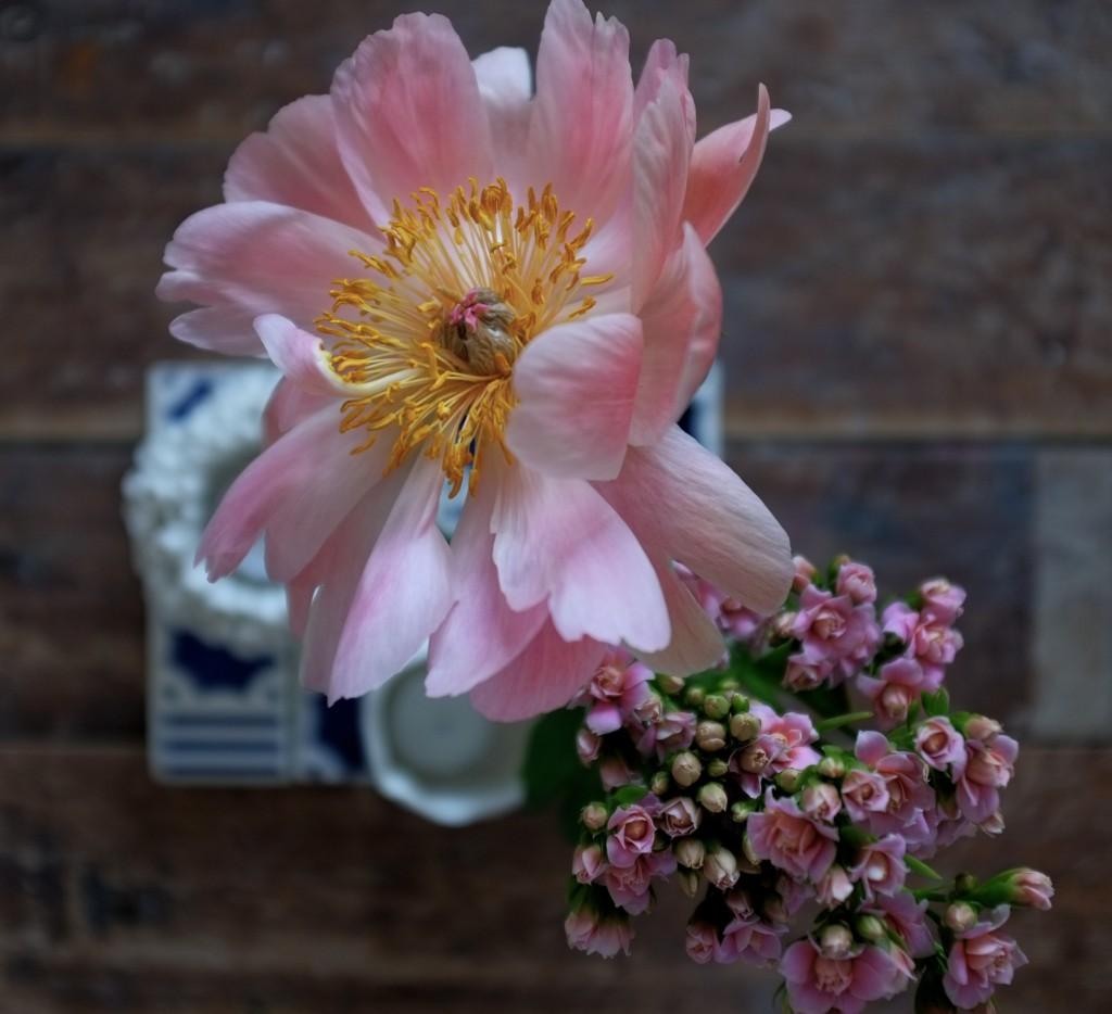 Queen blomster
